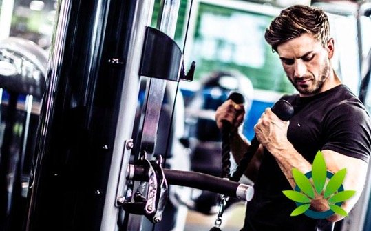 Working Out With CBD: CBD Supports Muscle Gain & Boosts Stamina • Ganjly
